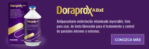 doraproxad3e-banner